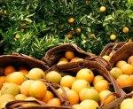laranjas elaranjas