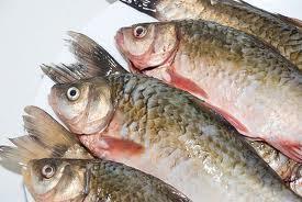 images (1) peixes